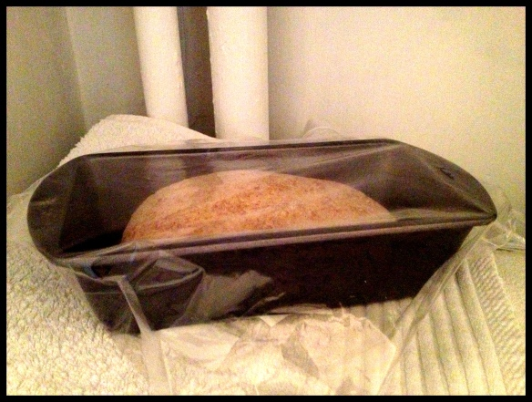 Wholemeal Bread - second prove in the airing cupboard again